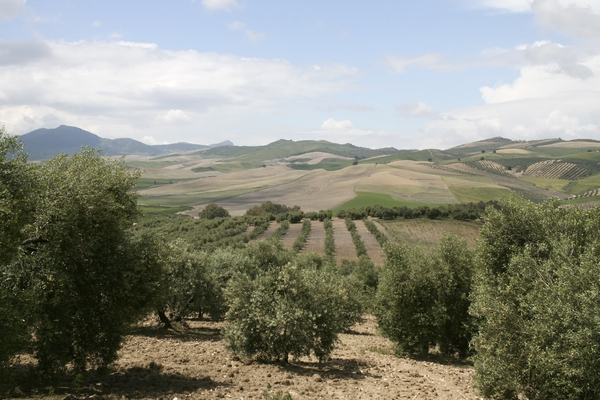 Agricultural landscape: Agricultural landscape of southern Spain.