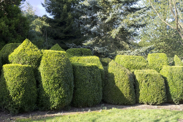 Topiary: Topiary in parkland in West Sussex, England, in winter.