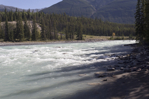 River rapids: Rapids on the Athabasca River, Canada.