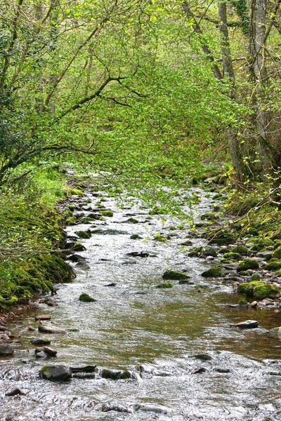 Mossy river in spring: A small river in mossy woodland in southwest England in spring.