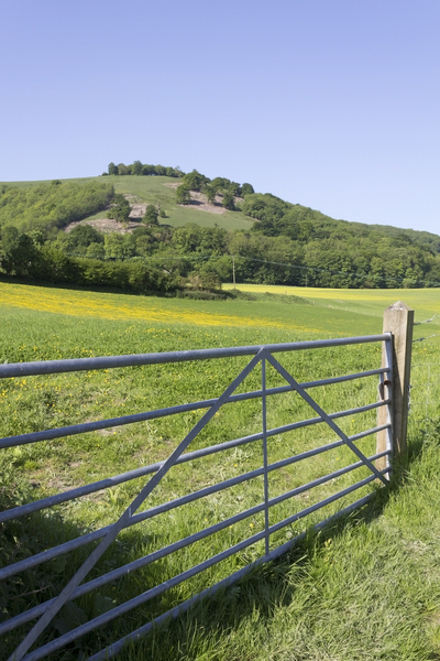 Field gate: A gate to a field near Chanctonbury Ring on the South Downs, West Sussex, England.