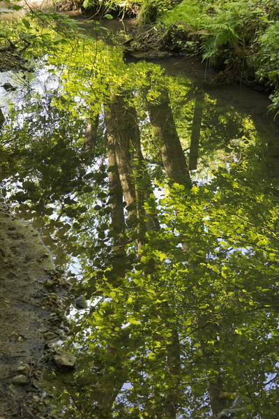 Woodland stream reflections: Reflections in a woodland stream in West Sussex, England, in spring.