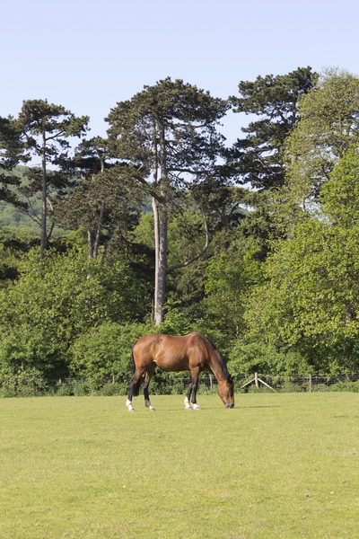 Landscape with horse: A horse meadow near the South Downs, West Sussex, England.