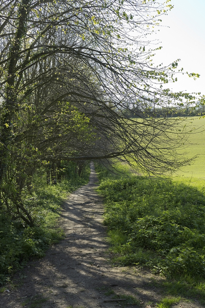 Countryside footpath: A footpath in the countryside of West Sussex, England, in spring.