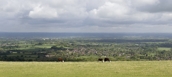 Landscape panorama: Landscape of the South Downs, East Sussex, England, in spring.