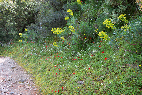 Wild flowers: Wild flowers on fortress ramparts at Mystras, Greece, in spring.