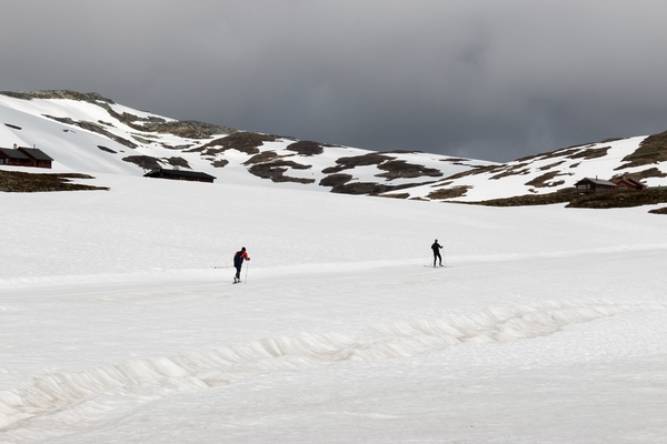 Cross-country skiing: Skiers on a high snowy plateau in Norway in July.