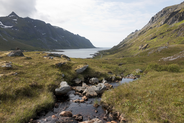 Mountain stream: A mountain stream approaching the sea in the Lofoten Islands, Norway.