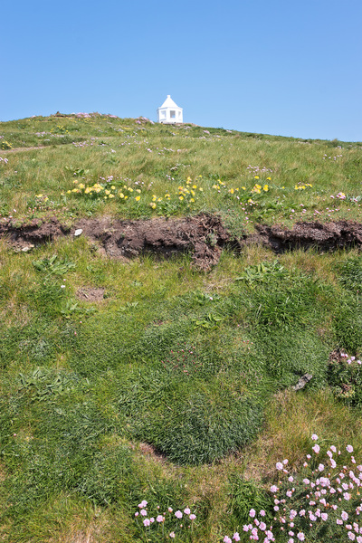 Mirador and wild flowers: A mirador amid wild flowers on Towan Head, Cornwall, England.