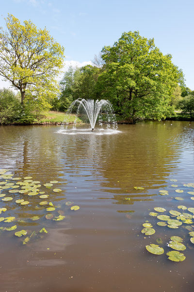 Ornamental Pond Free Stock Photos Rgbstock Free Stock Images Micromoth May 12 2019 1