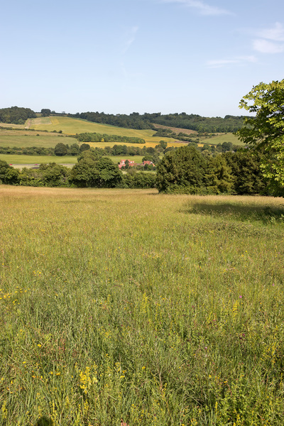 Summer landscape: Summer landscape at West Wycombe, Buckinghamshire, England.