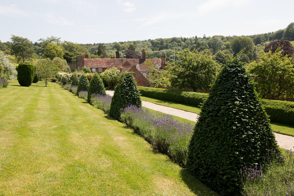 Garden border: A garden border of lavender (Lavendula) and topiary in Oxfordshire, England. Photography of this area was freely permitted.
