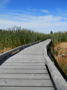 boardwalk: