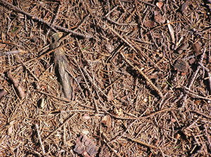 Forest bed: A forest bedding.