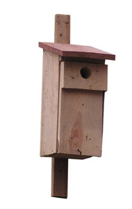 Birdhouse: A house for birds.