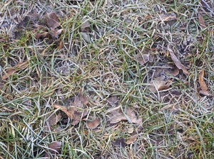 Frozen grass: A frozen ground.