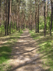 A walk through forest: A path in the forest