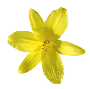Yellow flower: A small yellow flower.