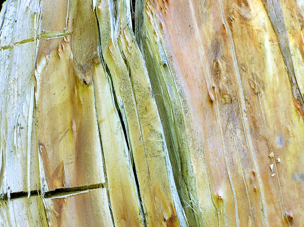 Wooden texture: Broken tree / wooden texture.Please mail me or comment this photo if you decide to use it. Thanks.I would be extremely happy to see the final work even if you think it is nothing special! For me it is (and for my portfolio)!