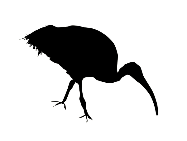 Ibis: A silhouette of an animal.