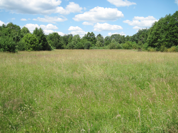 Meadow: Meadow near Urle, Poland.