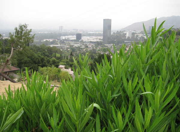 West Hollywood hills: West Hollywood panorama.