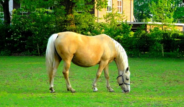 Horse1: A horse shot by my Sony camera