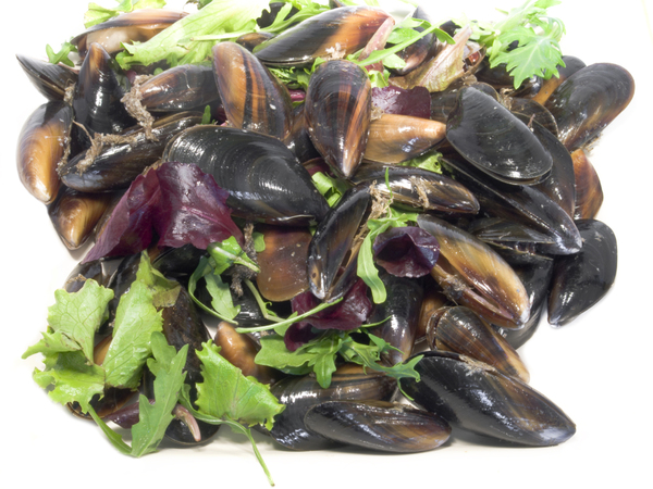 Mussels: Shell Fish