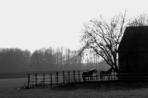 Horses in the campagne: Two horses feeding