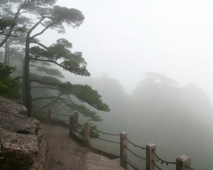 Misty day in the mountains: The shot was taken in Huangshan mountains, China. We are inside the cloud and it's raining. The file prepared to be a desktop wallpaper, any comments and ratings are welcome.
