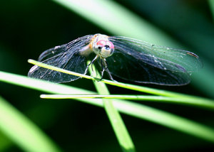 Dragonfly Series 1: Beautiful dragonfly waiting to be photographed.