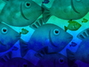Underwater Fish: A shoal of fish illustration.