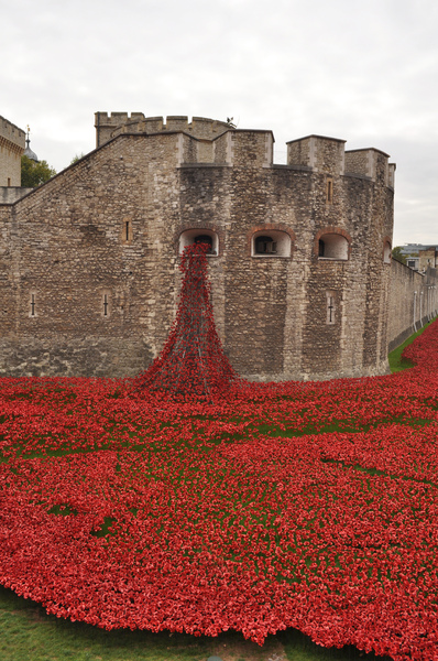 Poppies at Tower of London: Poppies at Tower of London to commemorate 100 years since WWI for each of the 876,000+ people killed.
