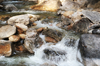 chilled water: Mountain Creek rushing through boulders