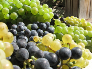 Grapes: From Washington State
