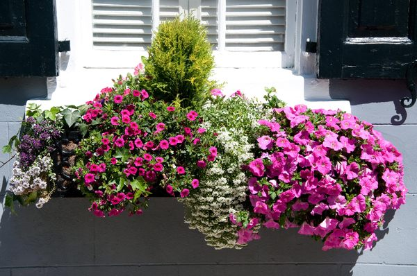 window boxes of Charleston: Window boxes on regency buildings in Charleston, South Carolina. Shot at midday in either direct or filtered sunlight