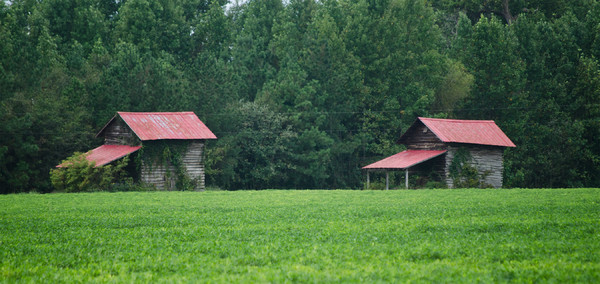 Rural Carolina Barns: Typical Tobacco Barns from the Carolinas, USA. Cloudy day, autumn.