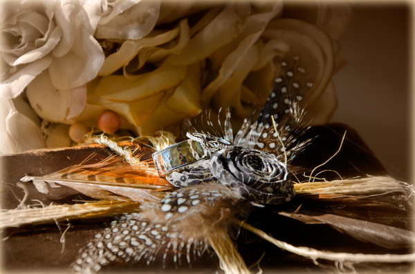 Rings, feathers and antique ro: Wedding rings placed on a bed of feathers with antique roses in the background