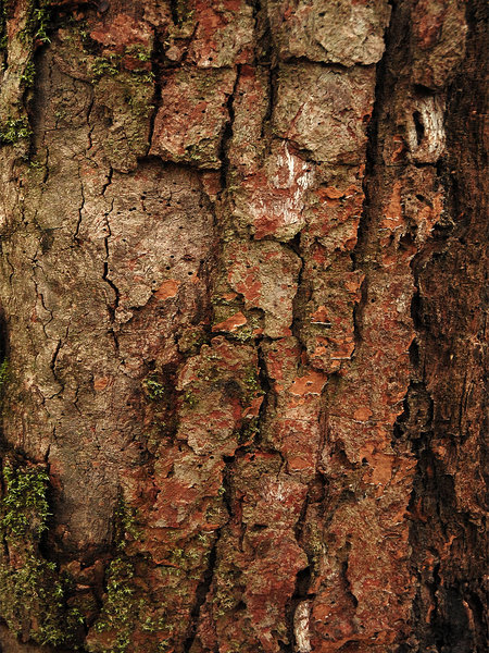 Tree Textures: Textures of Brazilian Savanna.