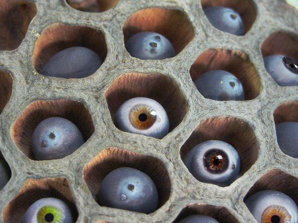 eyes in a basket: big thanks to kopiluwak for alowing me to use his image