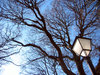 Streetlight & trees 1: A traditional streetlight in the San Carlos Garden, placed in the city of Coruña, Spain, EU