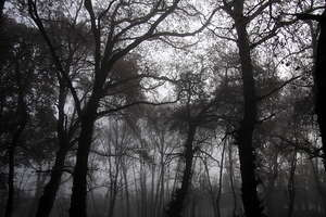 Foggy wood 2: Foggy wood