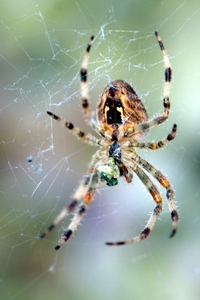 Spider 3: Spider and spider web in natural environment.