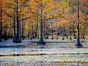 Autumn Swamp: Colorful background for a swamp