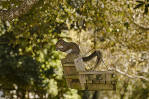 Squirrel Swing: Swing that also allows fine dining!