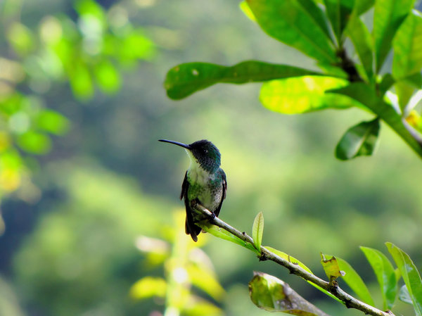 HummingBirds: more hummingbirds
