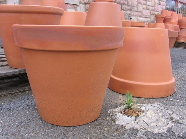 Pots for Flowers: Oops, missed the pot!