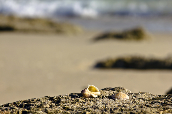 Beach Background: Receding tide, shells, shore.