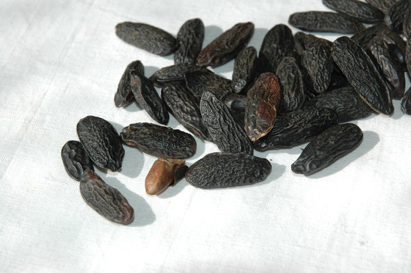 Tonka beans 1: Tonka beans or Tonquin beans originated from South Ameria, it tastes like vanilla but a little bit bitter