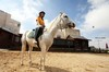 horse riding: In the middle of the day a girl trains on horseback riding